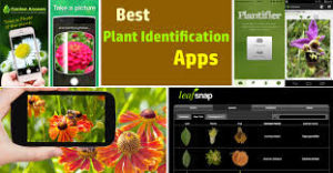 best plant identification app