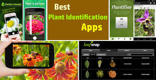 best plant identification apps
